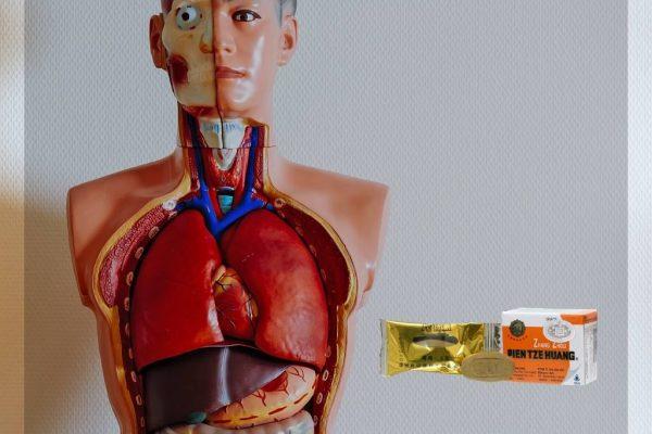 Faktor Penyebab Penyakit Hati dan Obat Liver yang Tepat untuk Mengatasinya
